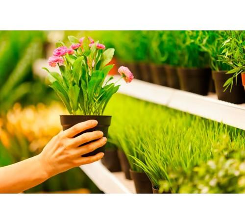 Как правильно выбрать комнатное растение