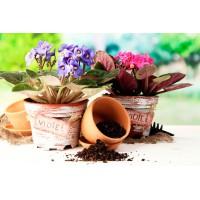Как правильно выбрать грунт и субстрат для комнатного растения