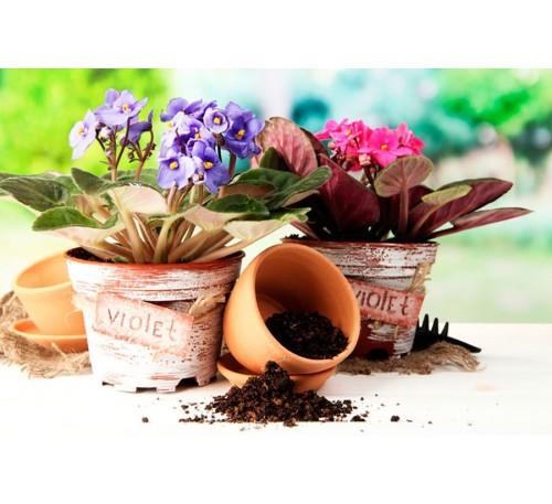 грунт субстрат комнатного растения