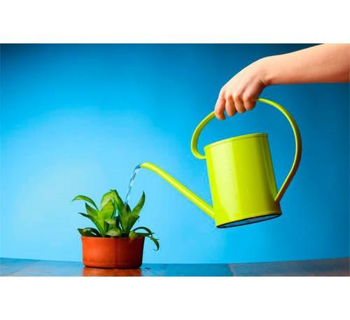 Особенности зимнего ухода за комнатными растениями