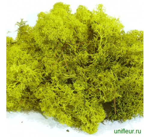 Мох (стабилизтрованный) Yellow