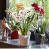 Orchidea (3)