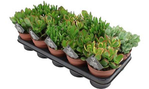 горшечные растения по паллетами